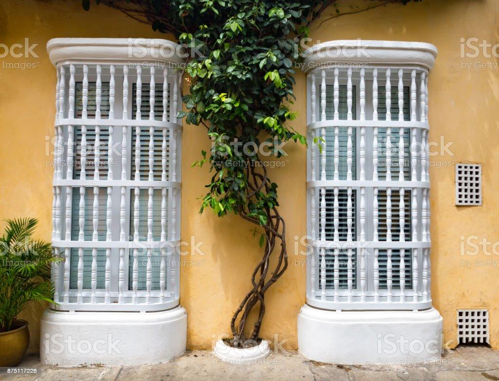 Windows with a Tree stock photo