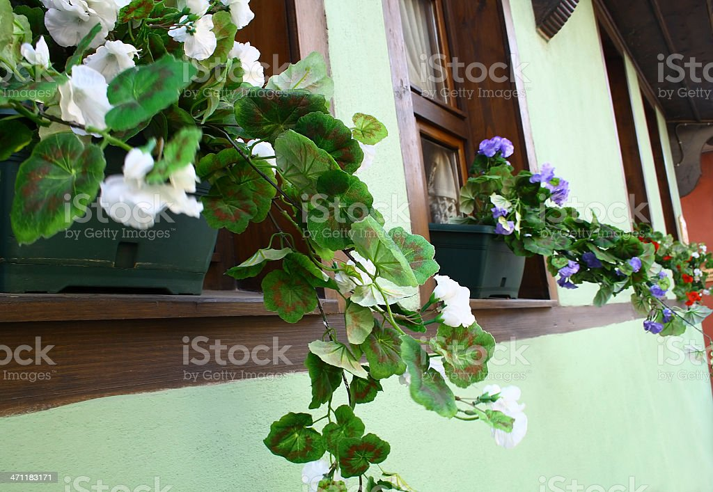Windows with flower pots royalty-free stock photo