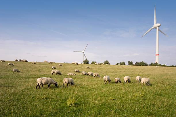 Windpower plant windmills with sheep Ein Teil des Windparks Wybelsumer Polder bei Emden. Windpower plant windmills with sheep lower saxony stock pictures, royalty-free photos & images