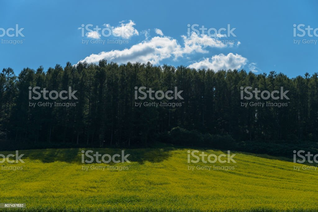 Windproof forest on the hill stock photo