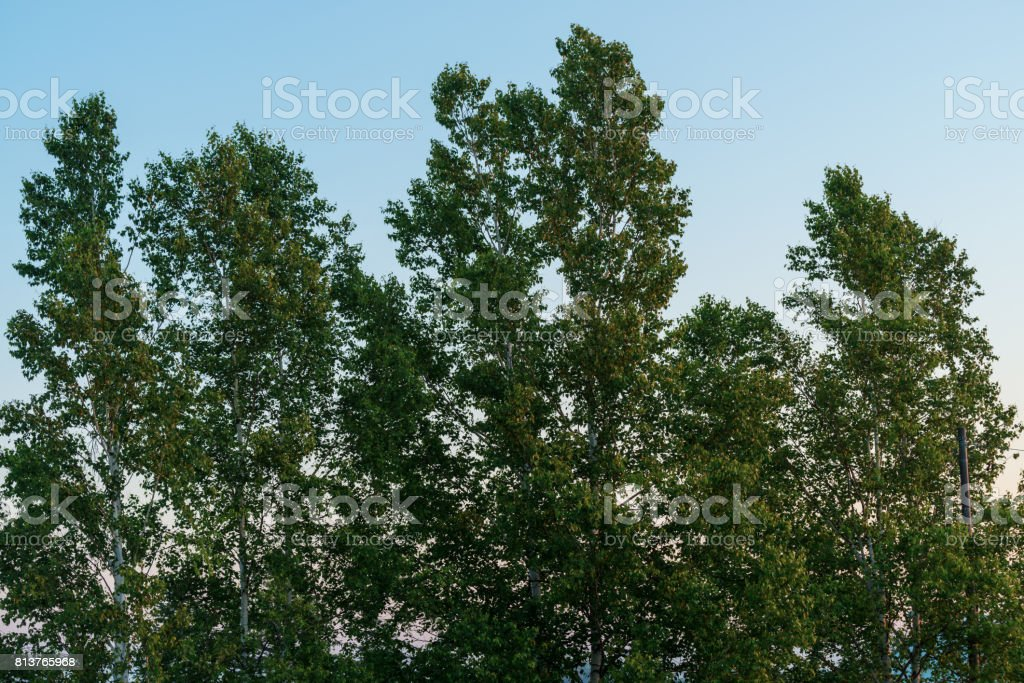 Windproof forest stock photo