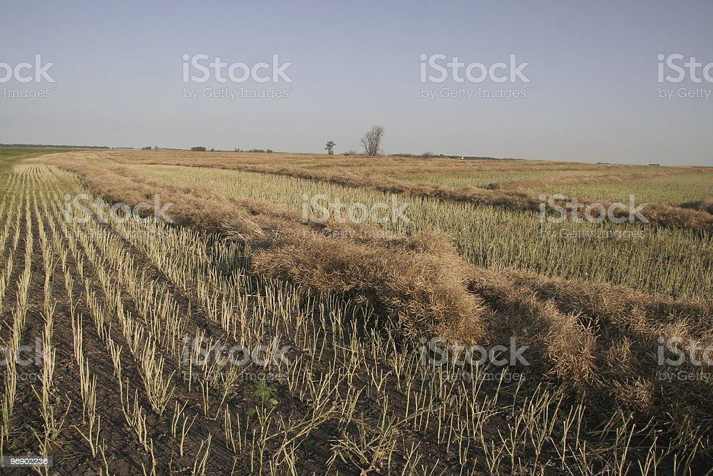 Windrow royalty-free stock photo