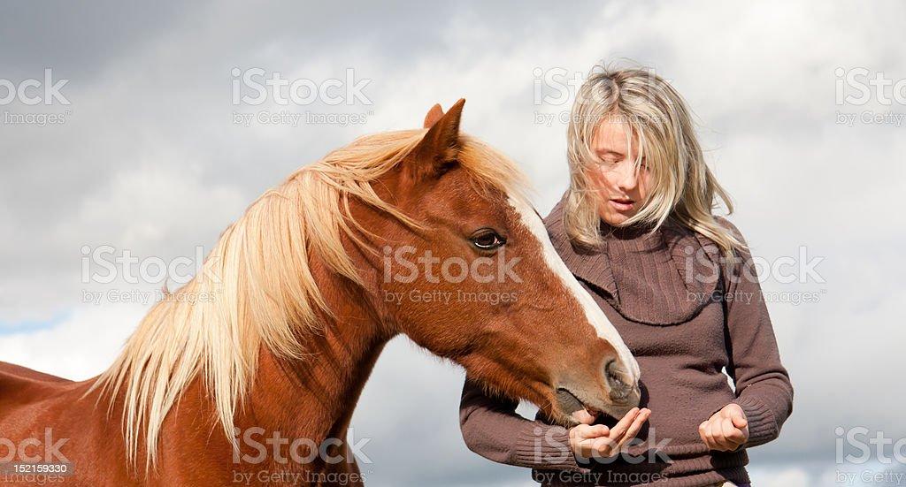 Windswept girl feeds pony from hand royalty-free stock photo
