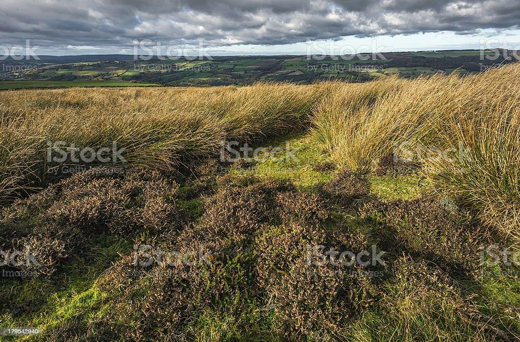 Windswept North York Moors, Grosmont, Yorkshire, UK. royalty-free stock photo