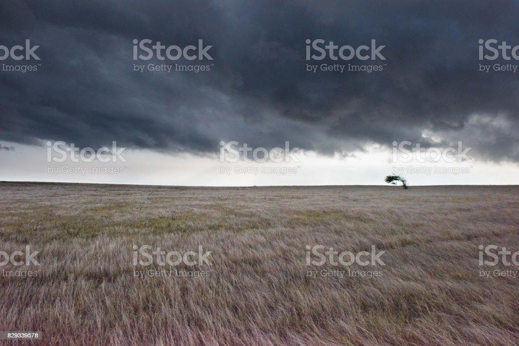 Windswept stock photo