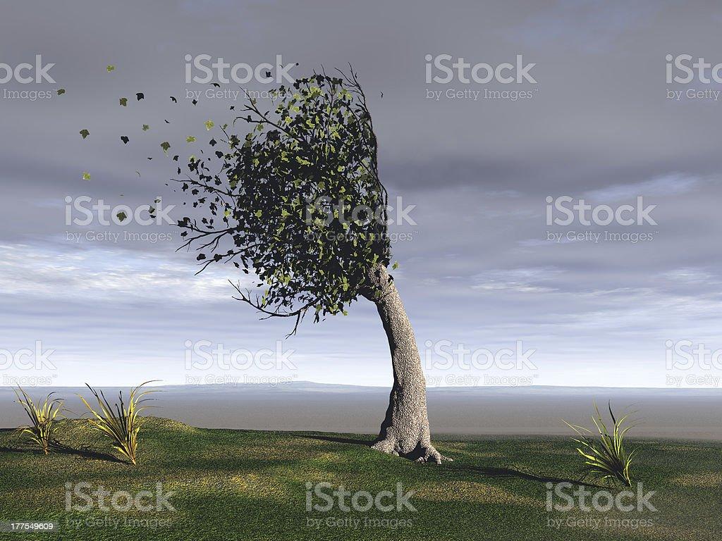 windswept tree – Foto