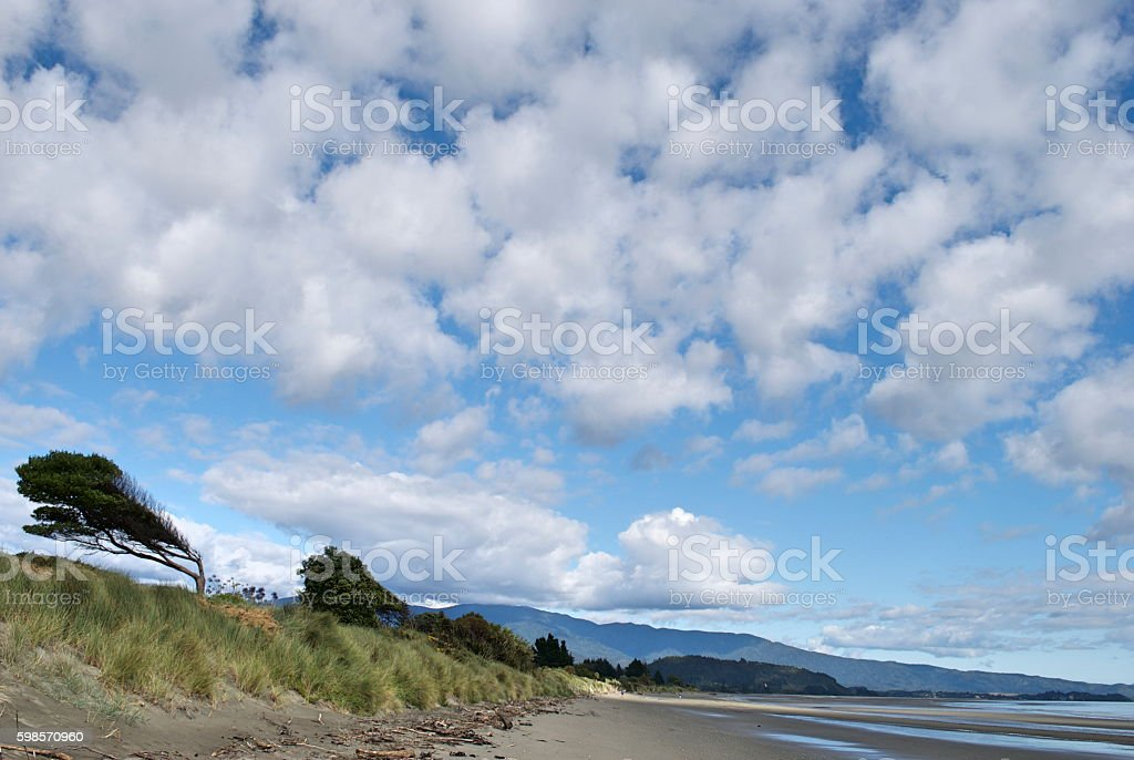 Windswept Trees on Beach, Pohara, Golden Bay, NZ stock photo