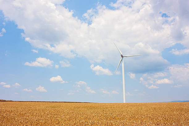 Windturbine next to a wheat field in Romania stock photo