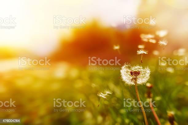 Windy dandelion in spring time picture id476004264?b=1&k=6&m=476004264&s=612x612&h=ry6pkz9pbrwvpjujw6v5ejs4mxxgixfvzitt2fhkcds=