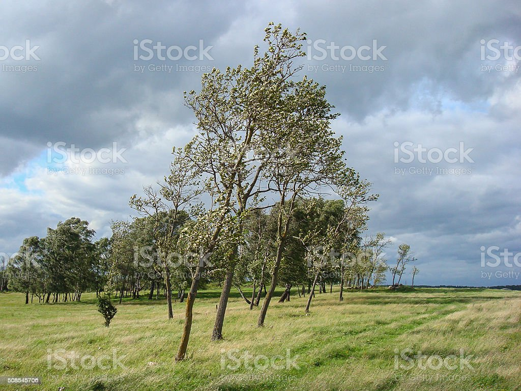 Windy Field - Royalty-free Agricultural Field Stock Photo