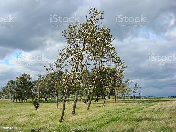 Windy Field Stock Photo - Download Image Now