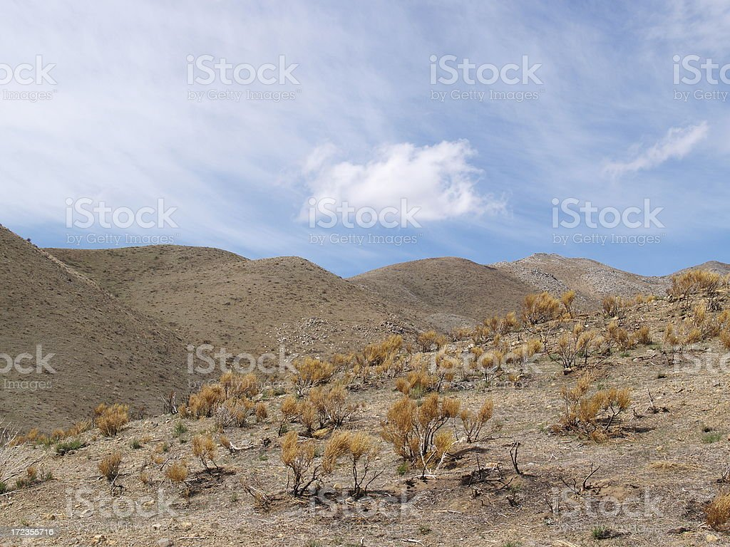 Windy Hills - Sweet Smell of Natural Sage Brush royalty-free stock photo