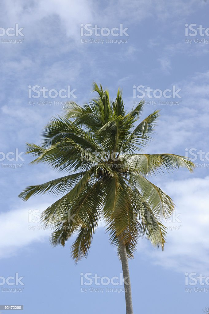 Windy Palms No.2 royalty-free stock photo