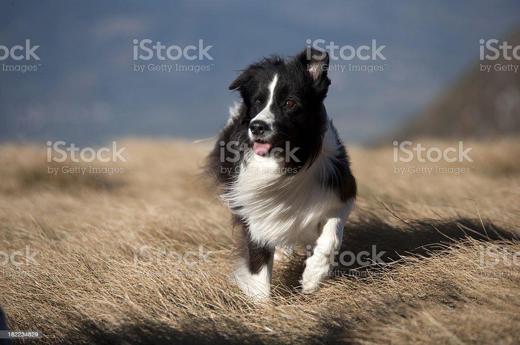 Windy portrait stock photo