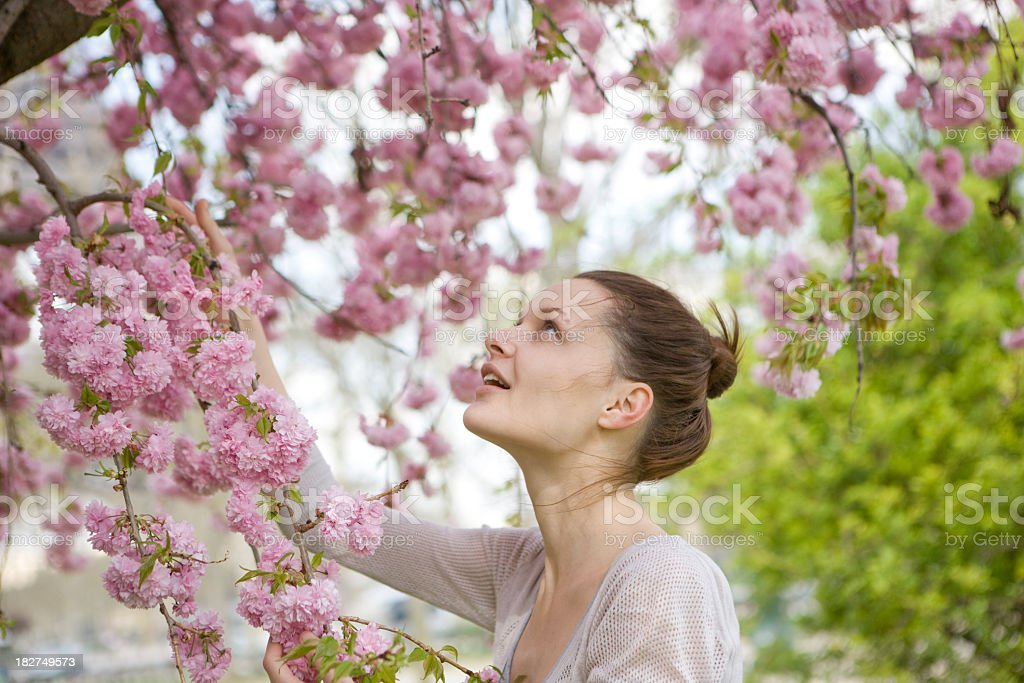 Windy spring royalty-free stock photo