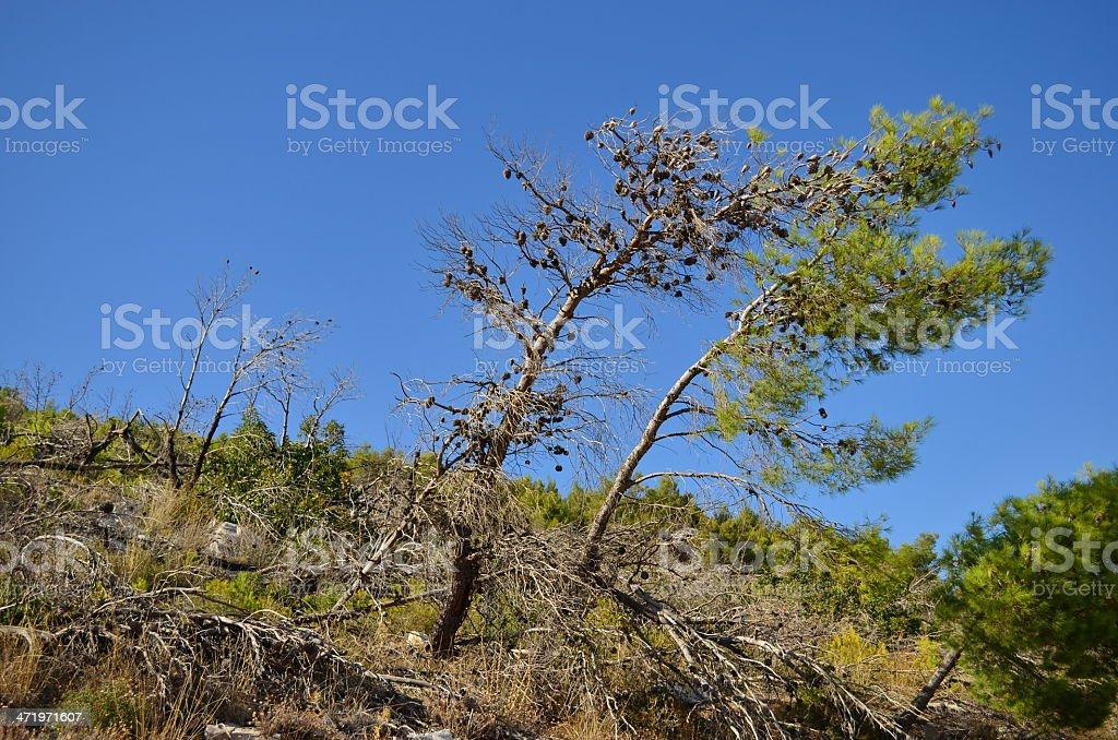 windy trees stock photo