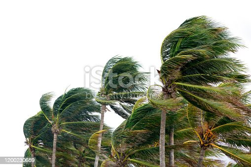 close up palm tree leaves waving in windy tropical storm over cloudy sky