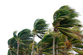 istock windy tropical storm 1200230659