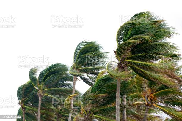 Photo of windy tropical storm