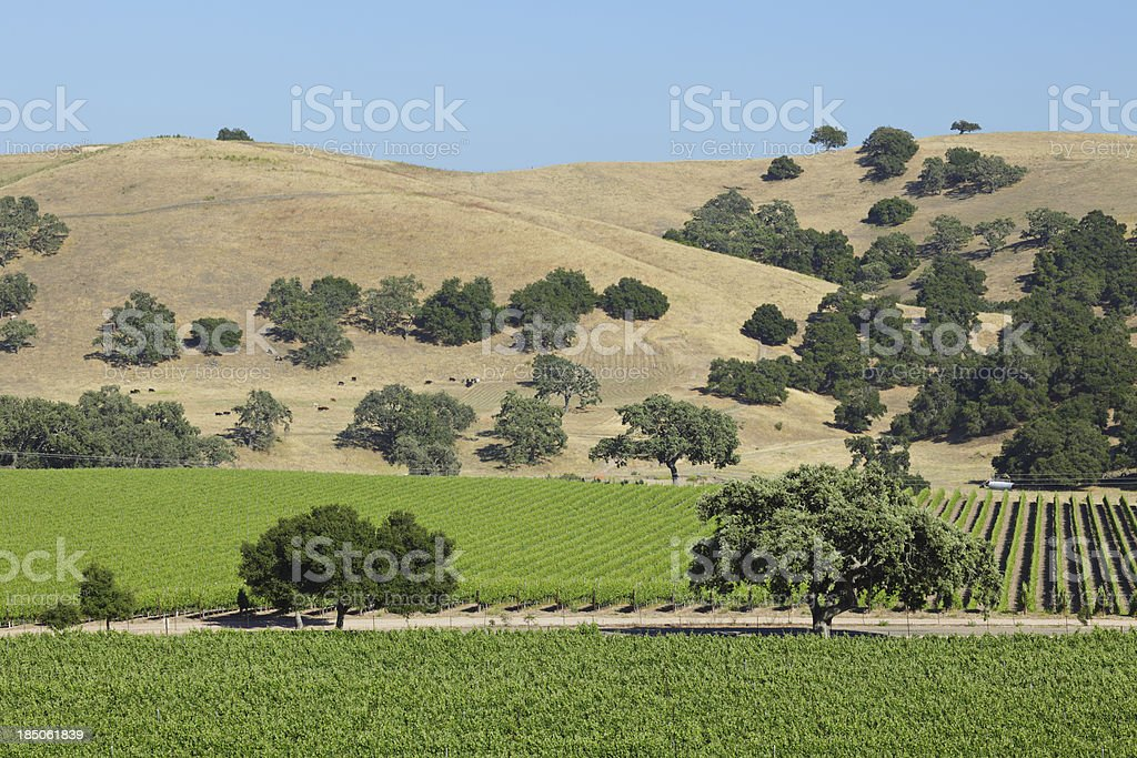 Wine Country Landscape royalty-free stock photo