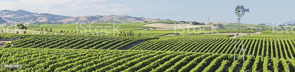 Wine Country Panorama stock photo
