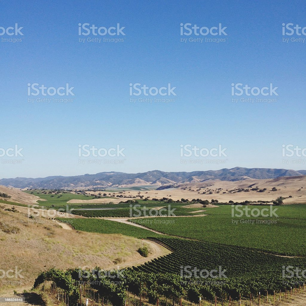 Wine Country stock photo