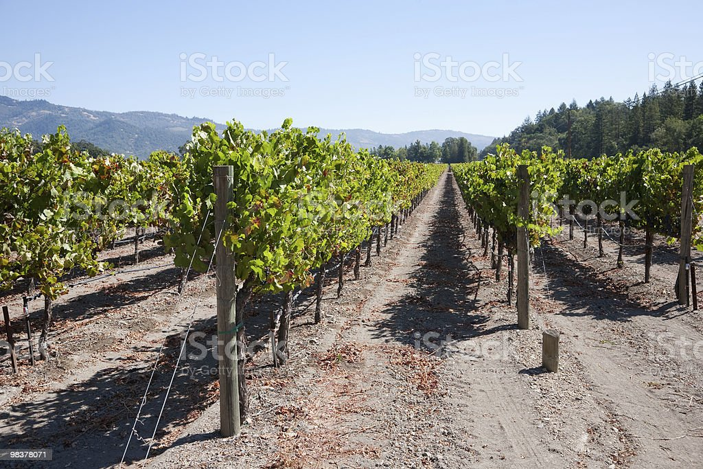 Vino Country foto stock royalty-free