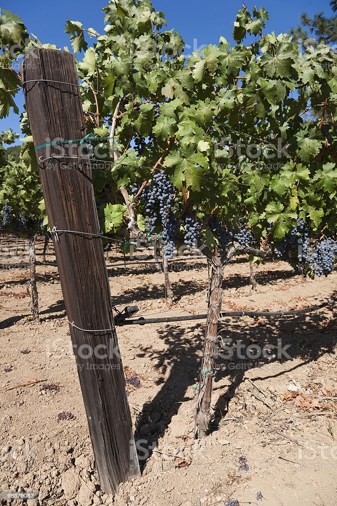 Wine Country royalty-free stock photo
