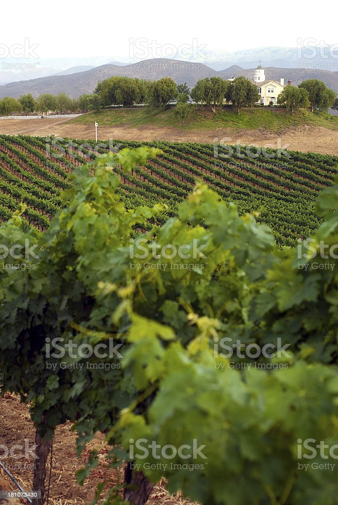 Wine Country scene royalty-free stock photo