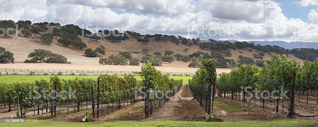 Wine Country Scenic stock photo