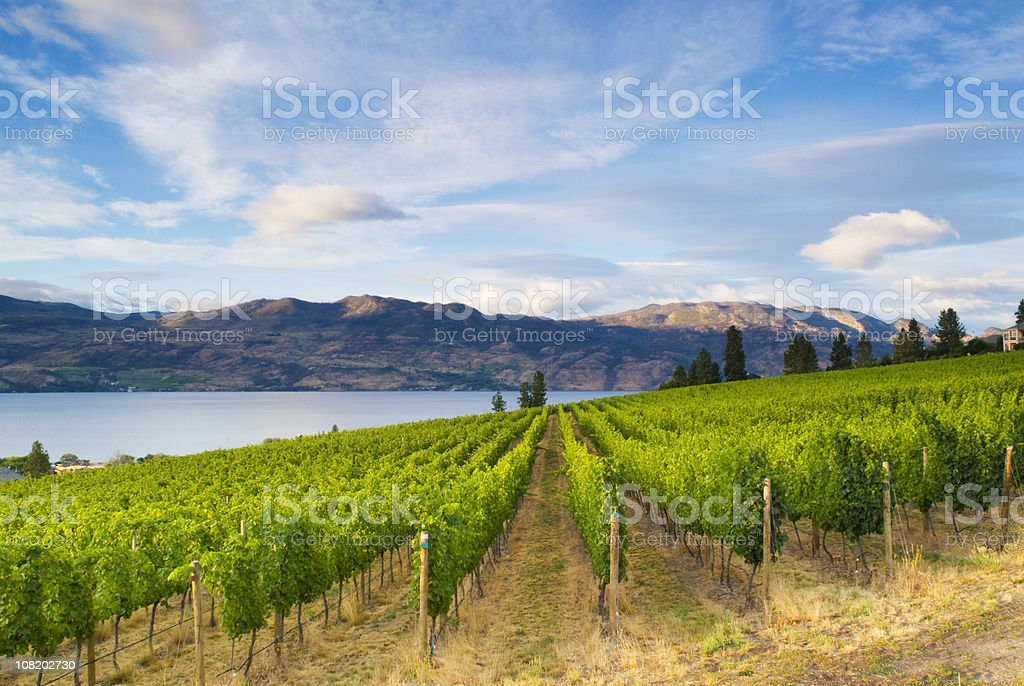 Wine Country Vineyards Along Lake stock photo