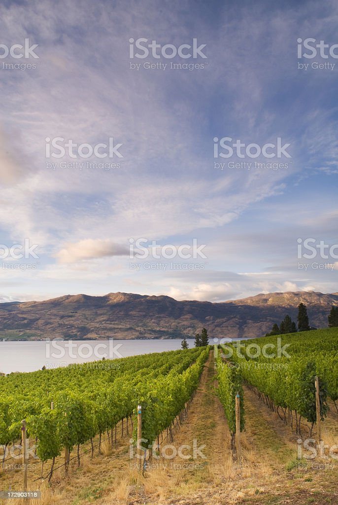 Wine Country Vineyards royalty-free stock photo
