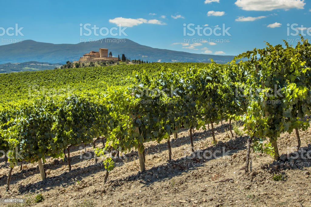 Wine Estate with Vineyards stock photo