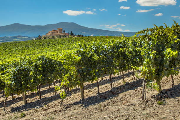 Wine Estate with Vineyards Wine Estate with Vineyards with  Rows of grapes on Hills on a Clear Summer Day provence alpes cote d'azur stock pictures, royalty-free photos & images