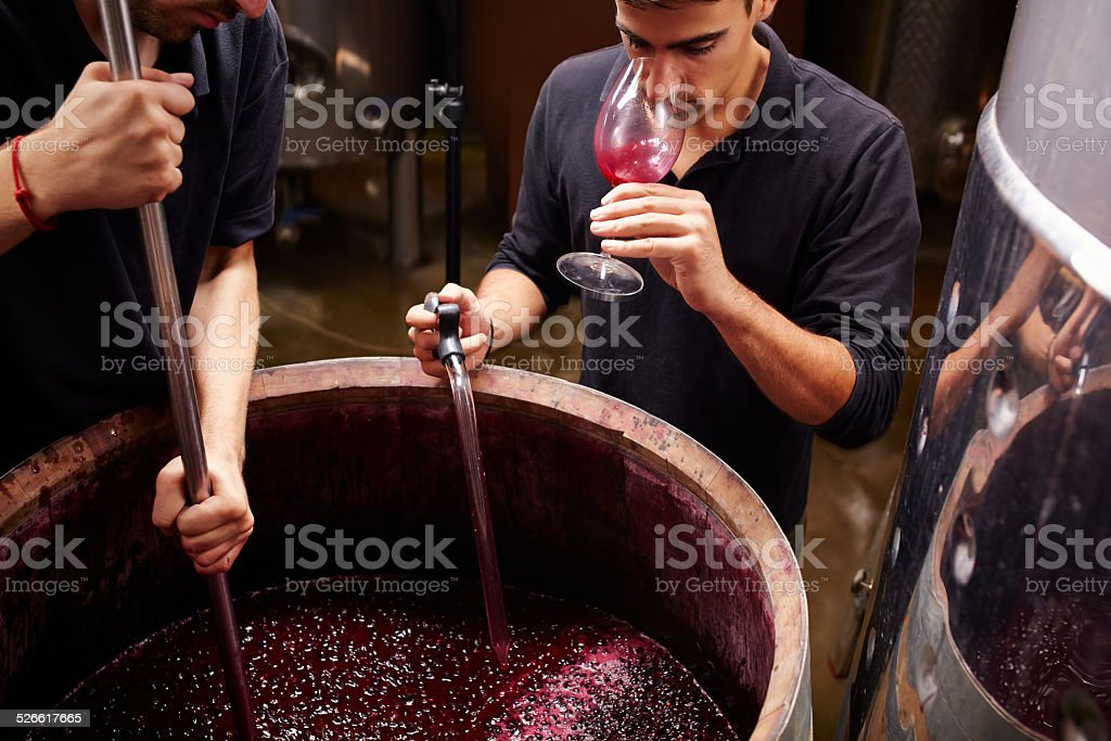 Wine expert tastes the wine before closing barrels stock photo