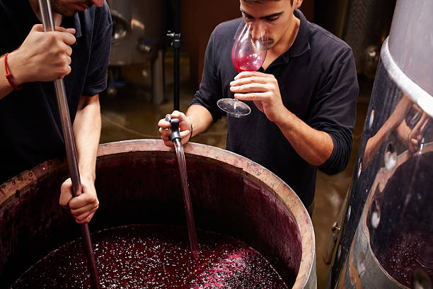wine expert tastes the wine before closing barrels - oenologie photos et images de collection
