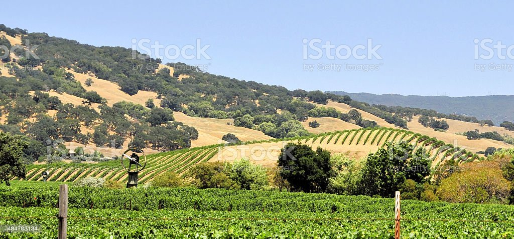 Wine Fields stock photo