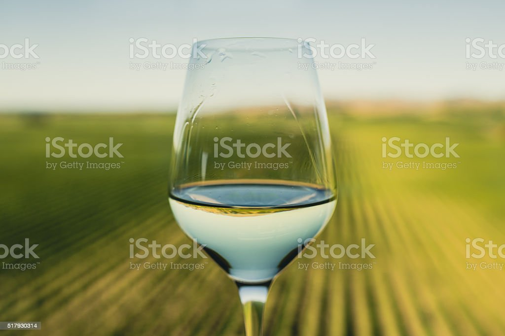 Wine glass at a vineyard royalty-free stock photo