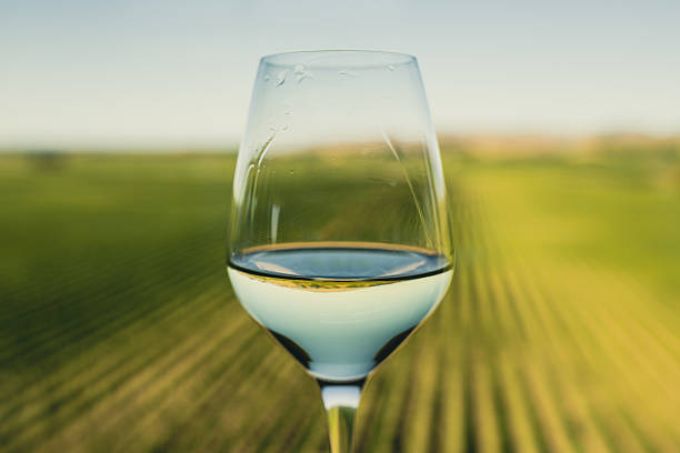 Wine glass at a vineyard stock photo