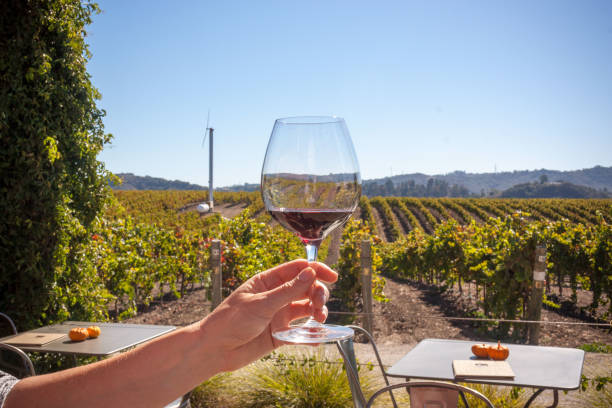 Wine Glass Held Up In Wine Vineyard stock photo