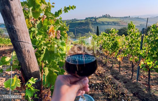Wine glass of in hand of drinker, between grapevine lines of wineyard. Green vineyard landscape with farms on hills of Italy.
