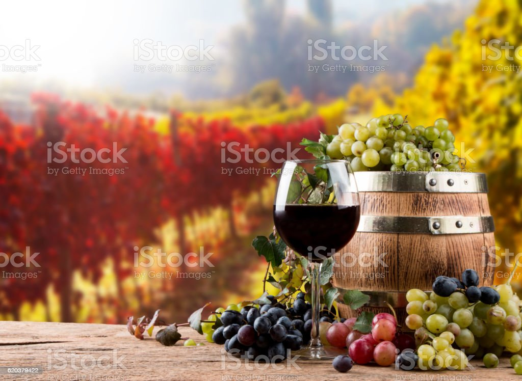 Wine glass foto de stock royalty-free