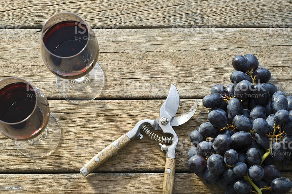 Wine Grape Harvest stock photo