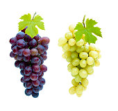 Wine Grapes Isolated