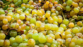 Wine grapes and wineries