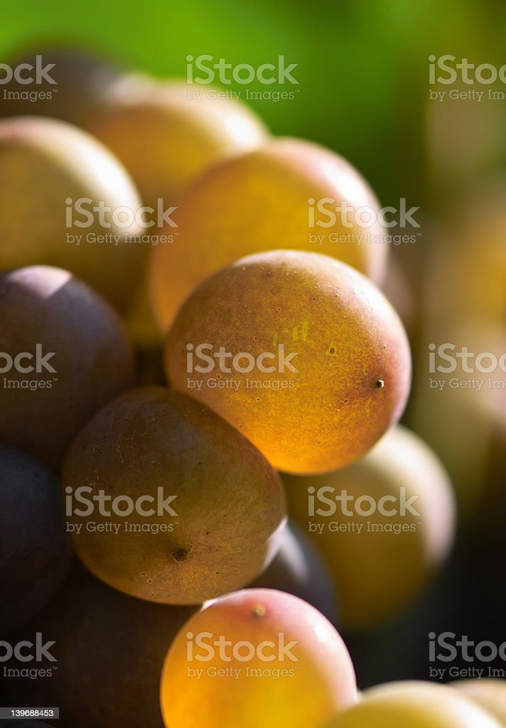 Wine grapes close-up royalty-free stock photo