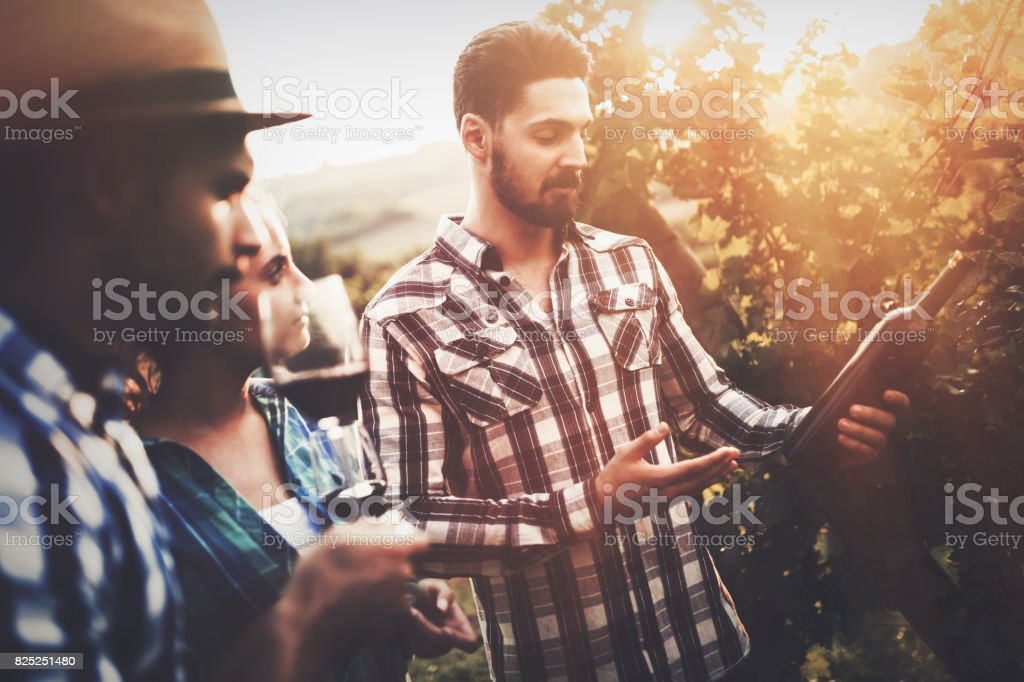 Wine grower and people in vineyard stock photo