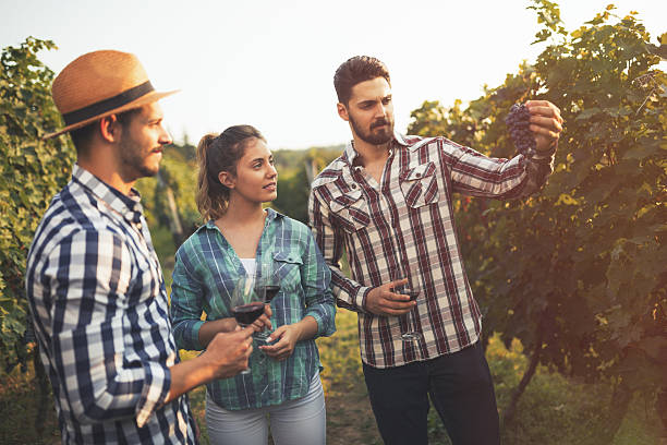 Wine grower showing grapes stock photo