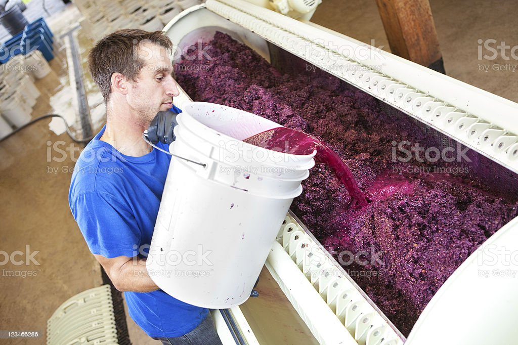 Wine maker pouring wine juice in a winery stock photo