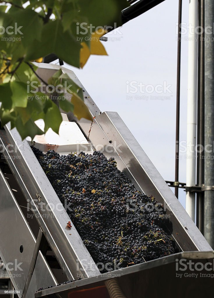 Wine making process - Royalty-free Agricultural Machinery Stock Photo
